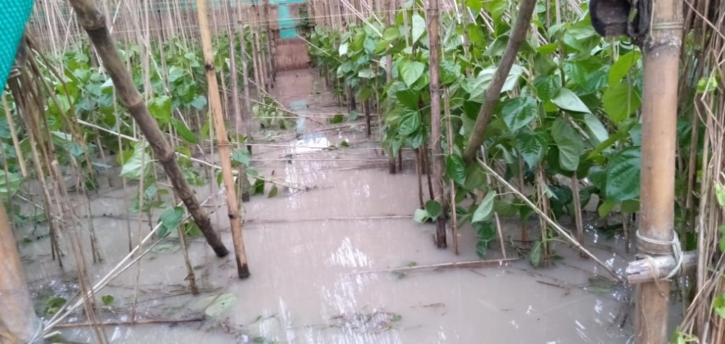 Impacted Pan Boraj By Cyclone Bulbul