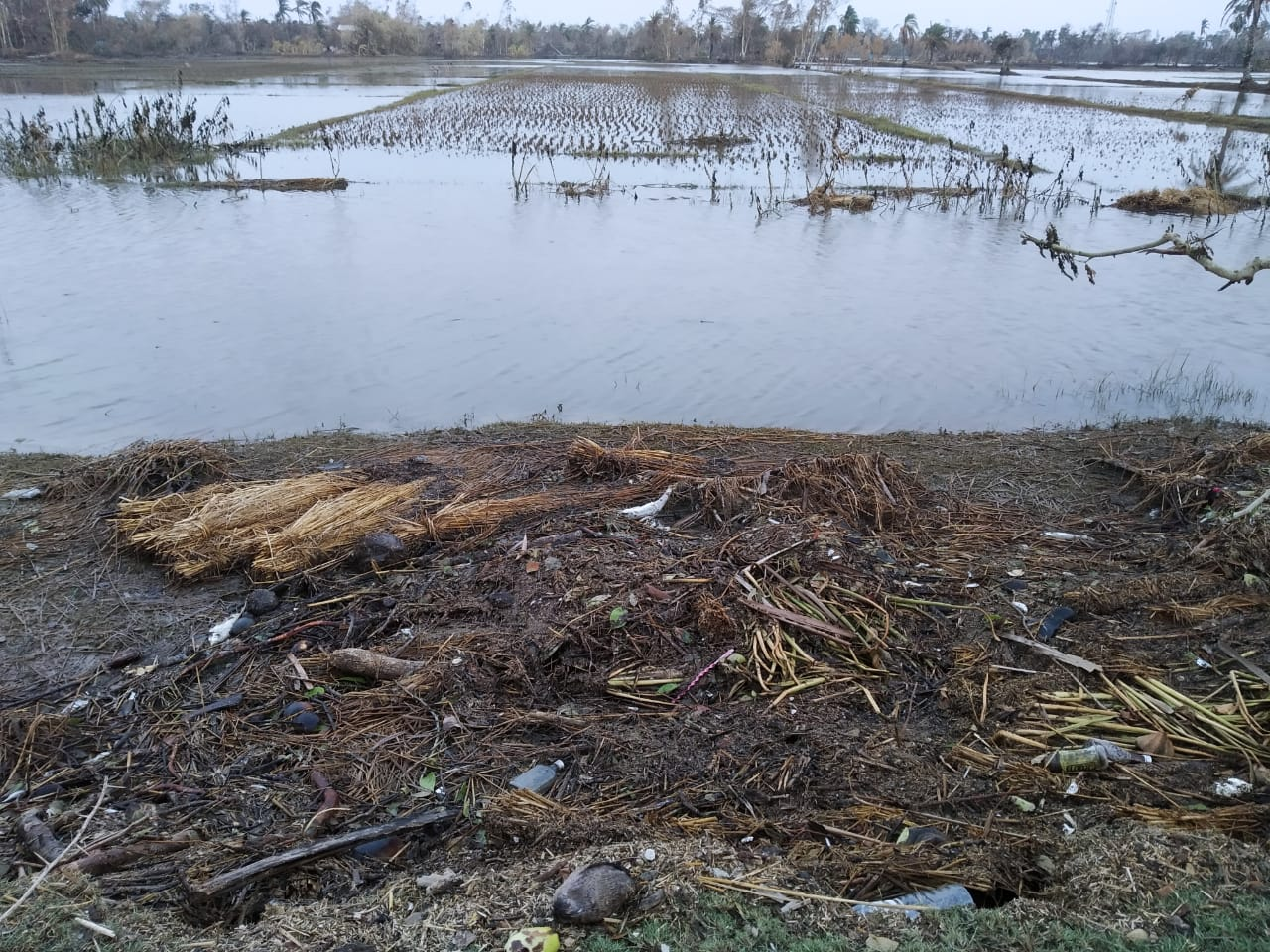 Salty Water Flooded The Agricultural Lands Of Pathatprotima Block