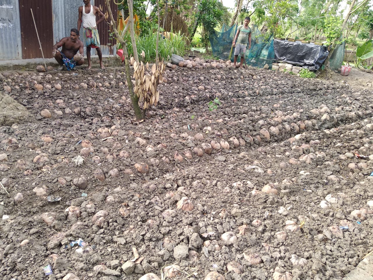 Coconut Seeding Program By Mukti In Association With