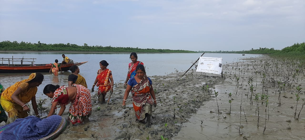 Mangrove Plantaion Program By Mukti In Association With