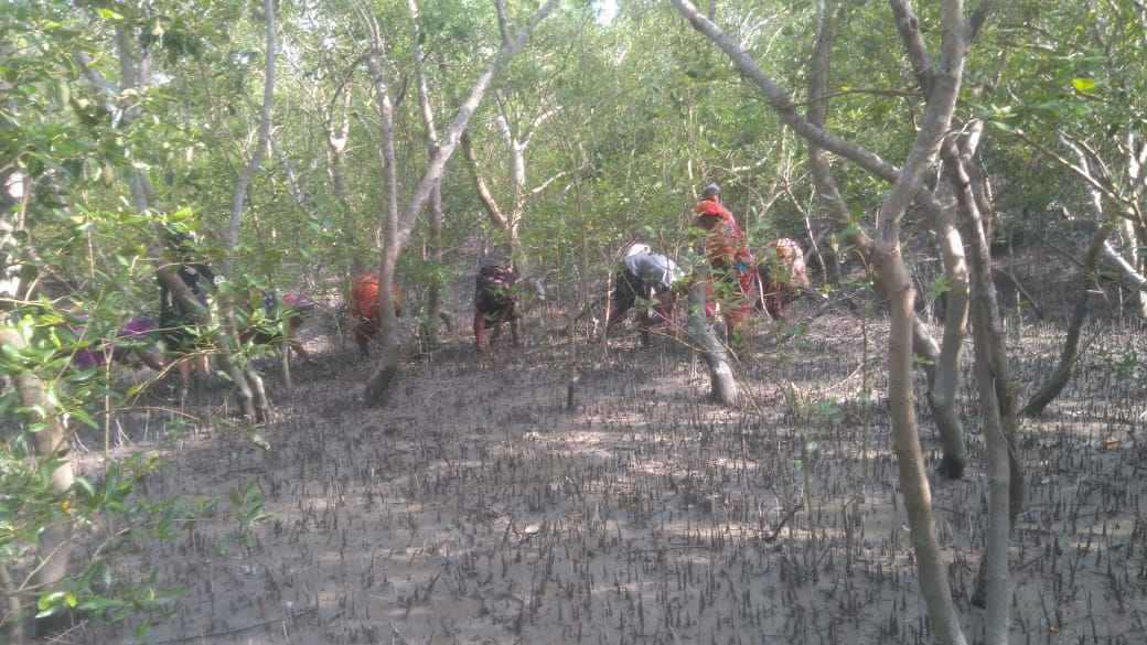 Mangrove Seed Plantation Program At Basanti Block
