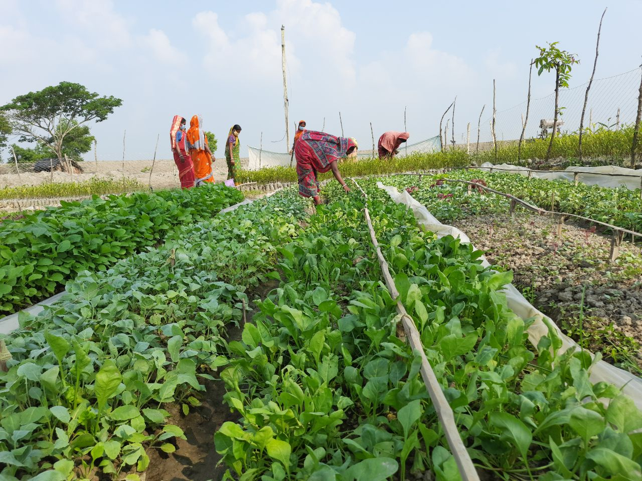 Mukti Vegetable Garden At Hingalgunj