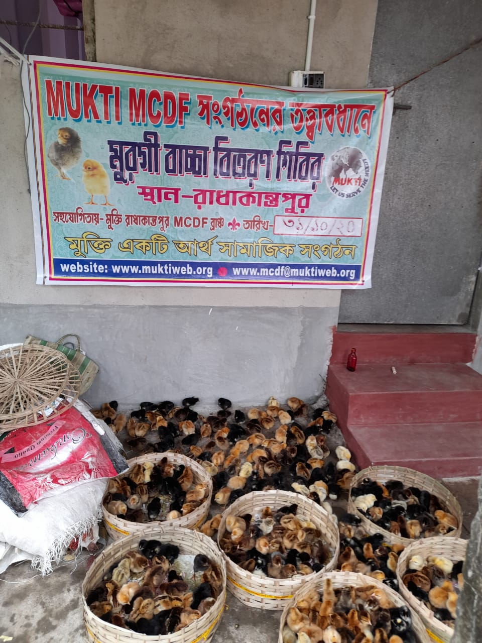 Mukti Distributed Chicks To The Mcdf Members Of Radhakantapu...