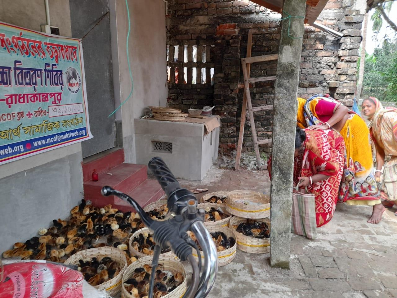 Mukti Distributed Chicks To The Mcdf Members Of Radhakantapur Branch