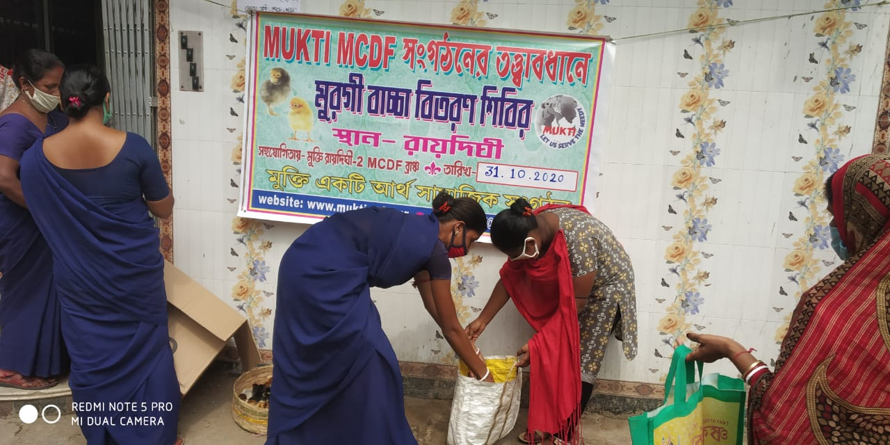 Mukti Distributed Chicks To The Mcdf Members At Raidighi Ii ...
