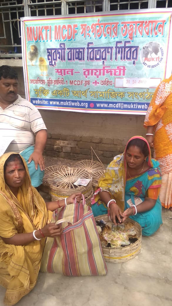 Mukti Distributed Chicks To The Mcdf Members At Raidighi I B...