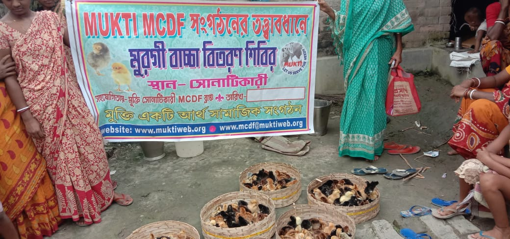 Mukti Distributed Chicks To The Mcdf Members At Sonatikari B...