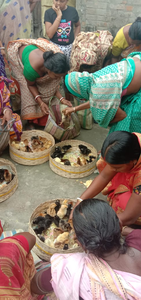 Mukti Distributed Chicks To The Mcdf Members At Sonatikari Branch