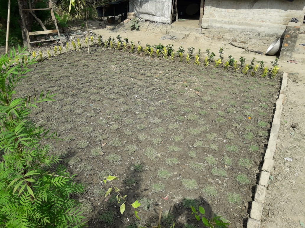Mukti Is Decorating The Houses Of Model Village With Flower Saplings