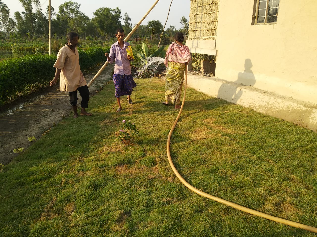 Watering Work Is Going On At Mukti Library Lawn And Model Houses