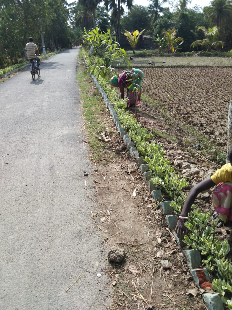 Mukti Is Using Vermicompost At The Roadside Hedge Of Mukti G...