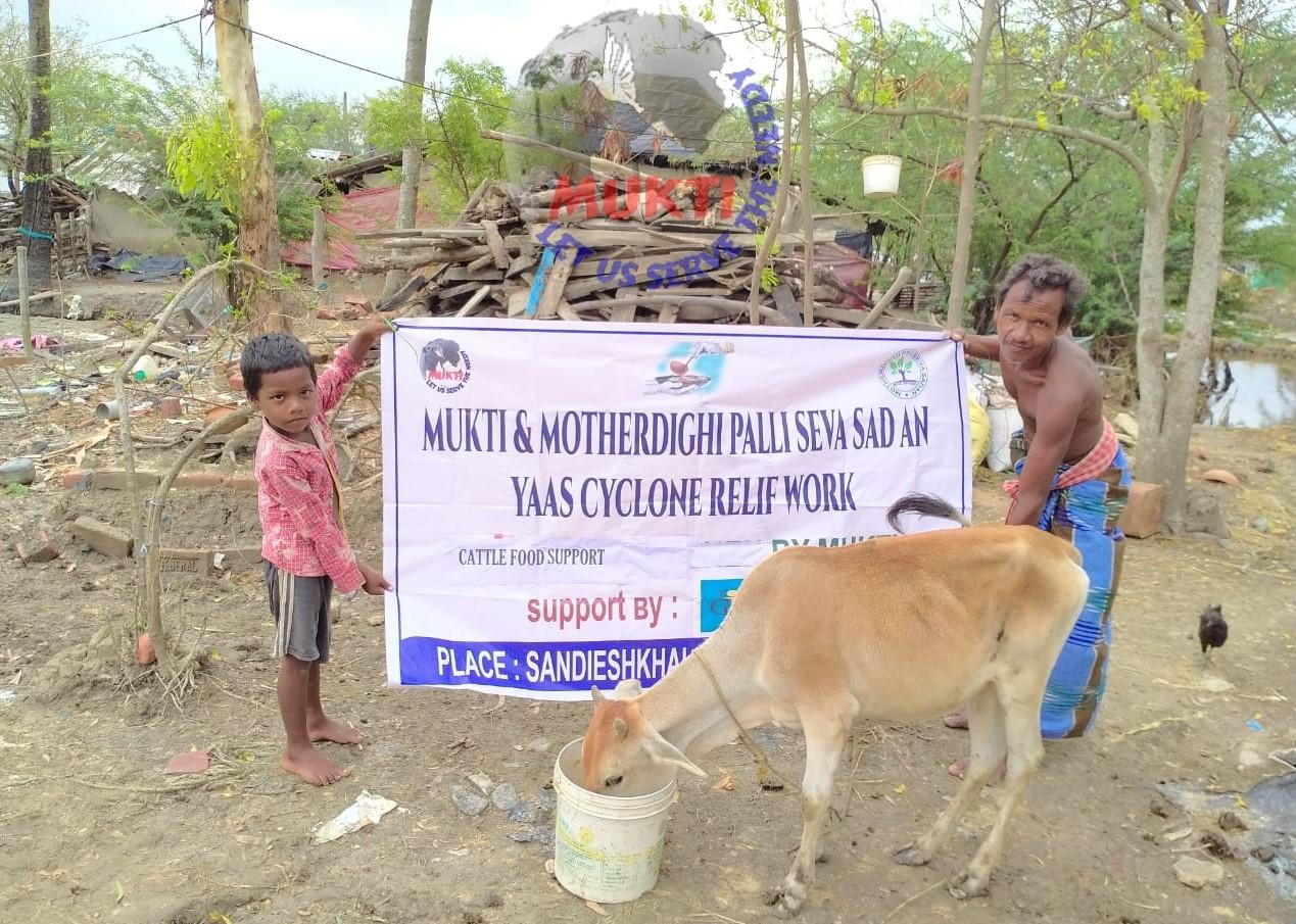 Animal Fodder Distribution At Sandeshkhali