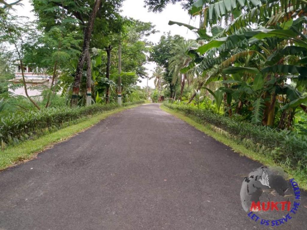 Roadside Hedge Plantation At Mukti Gram