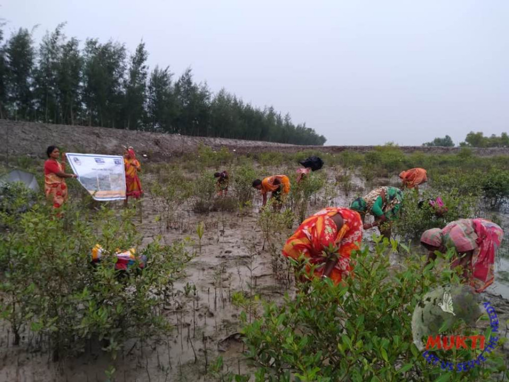 On The Occasion Of World Mangrove Day Mukti Re-planted Mangr...