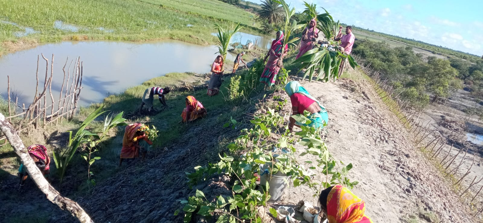 Flower And Coconut Saplings Are Planted Beside The River Boundary Of Mangrove Project At Nagendrapur Gram Panchayat