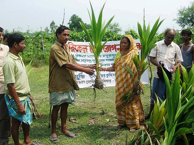 Donate 5 Coconut Saplings to Poor Villagers