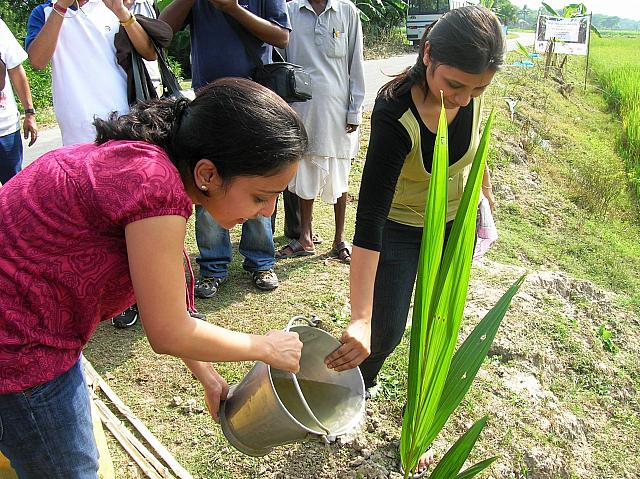 Donate 10 Coconut Saplings to Poor Villagers
