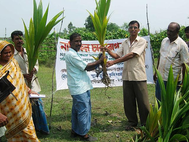 Donate 15 Coconut Saplings to Poor Villagers